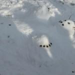 ein liegender Schneemann